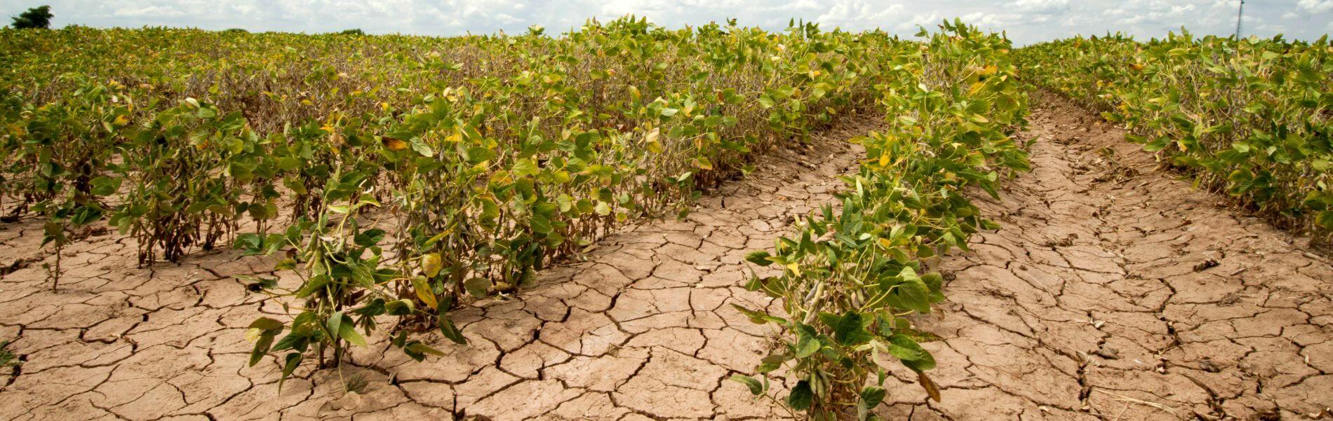 GEISEQ: Sistema Multiherramienta para la Gestión Integral de Sequías