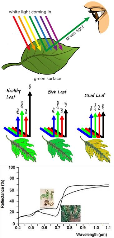 With our NDVI technology damaged plant material can be distinguished from healthy plant material.