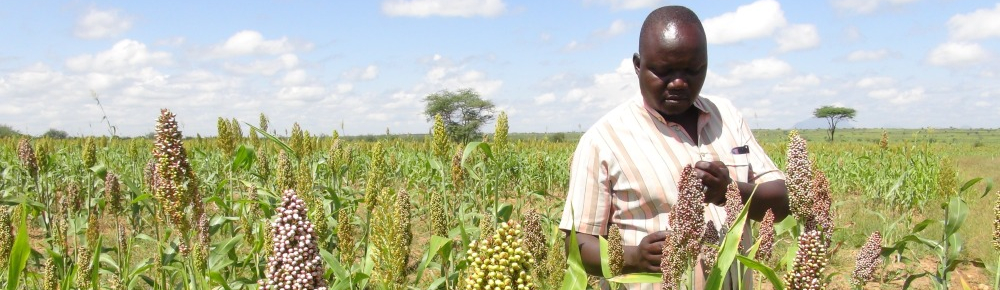 APSAN-Vale: Piloting Innovations to Increase Water Productivity and Food Security in Mozambique