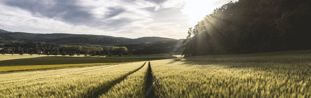 Climate Risk Assessment using the Decision Tree Framework